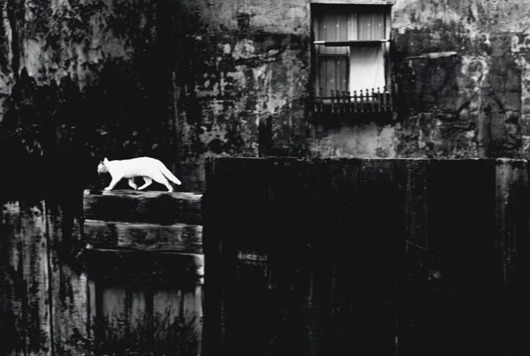 Parigi, Muro nero con gatto....