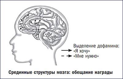 dofamin.jpg.pagespeed.ce.mI52ALuetg